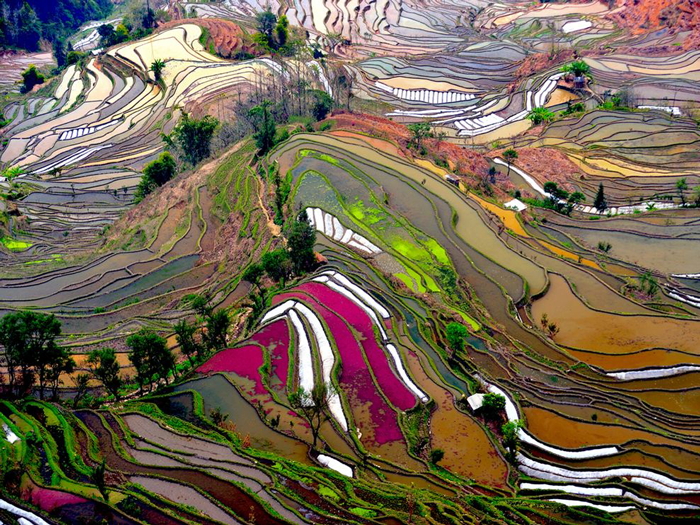 terraced-rice-field-china