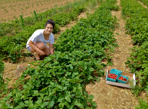 Strawberry picking with Nicole at Lewin Farms, Long Island, NY
