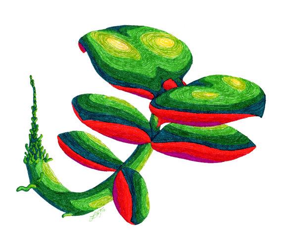 jade plantlet